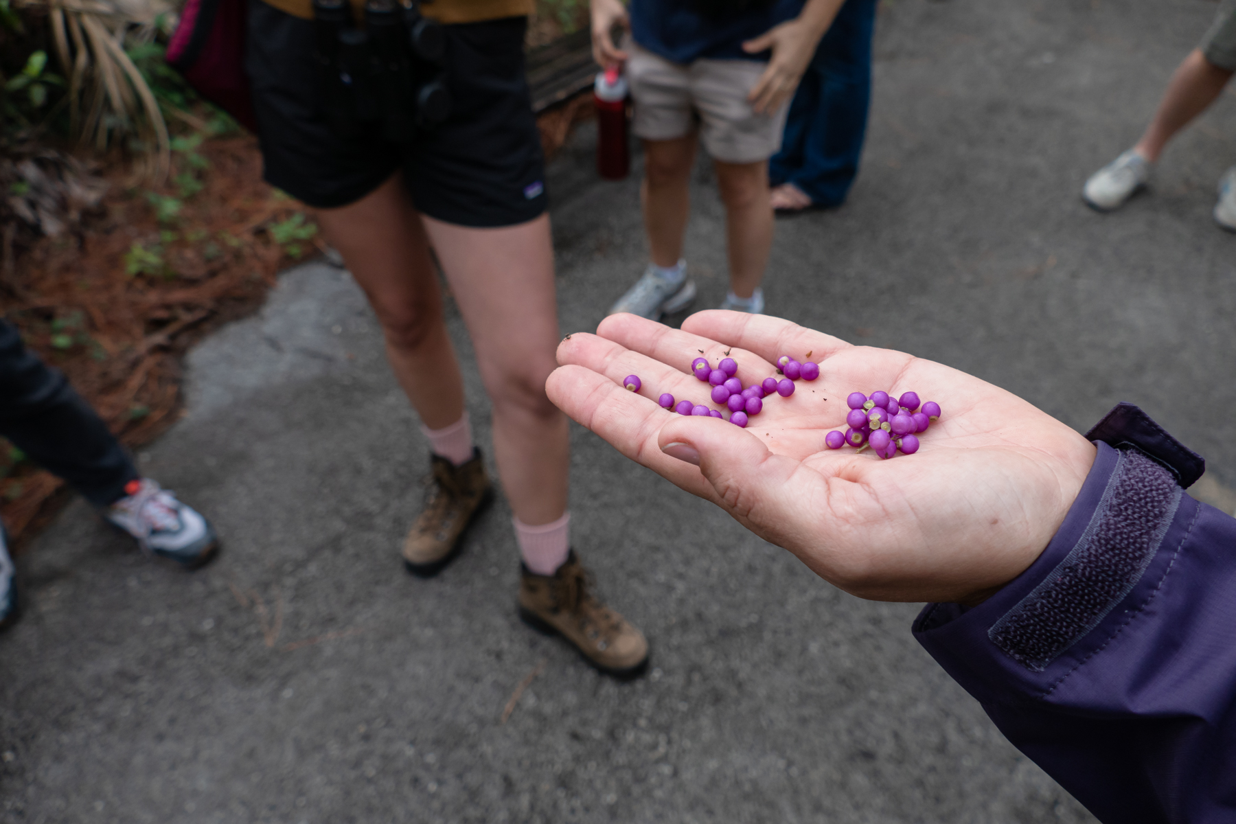 Eliana shows the group Florida's native beautyberry.