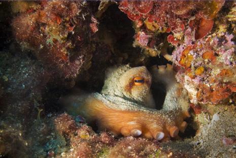 International Diver Mag Image 02a.jpg