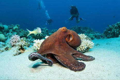 International Diver Mag Image 03a.jpg
