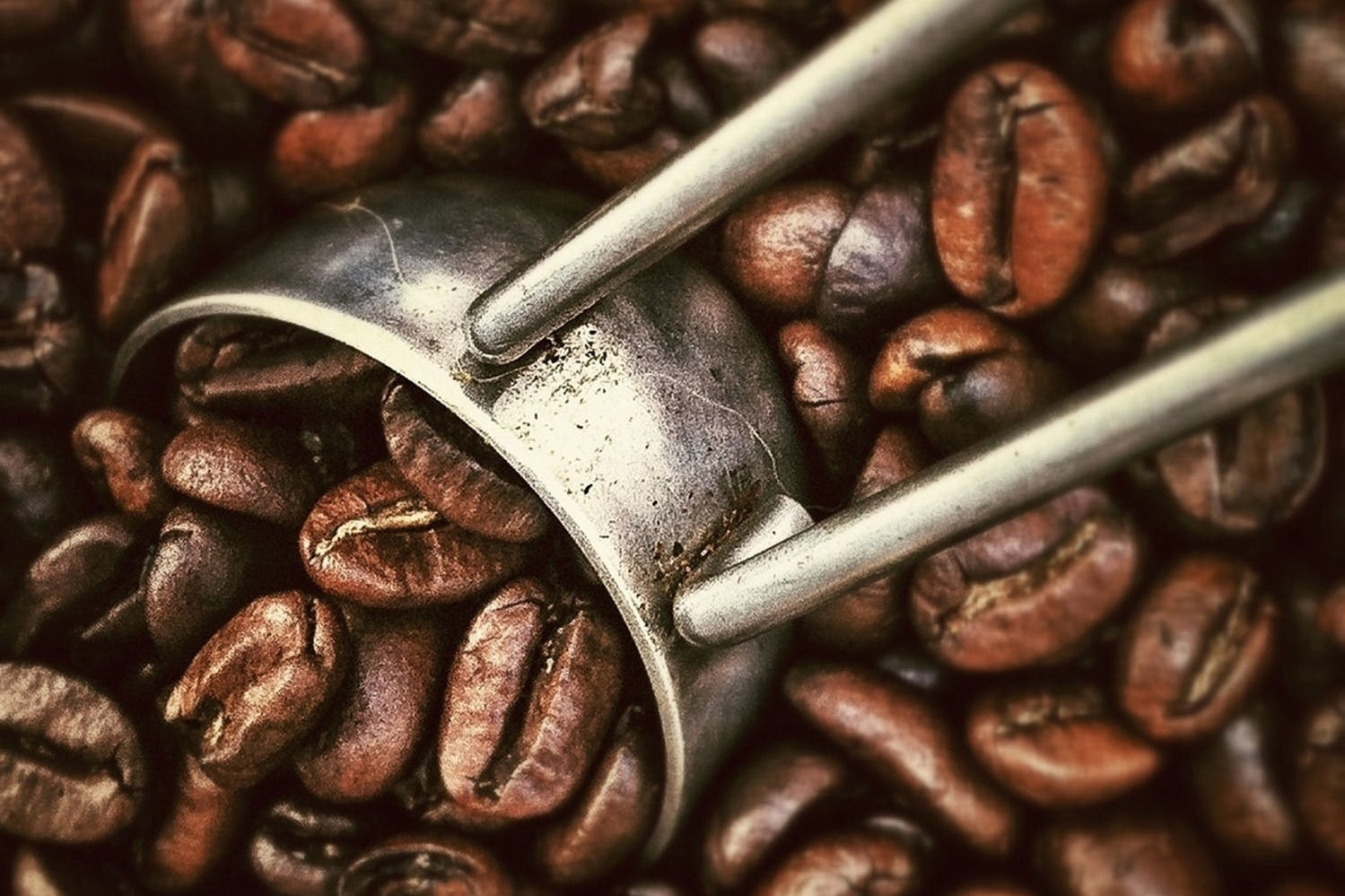 See coffee beans - CLICK FOR INFO