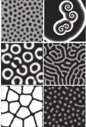 Turing Pattern