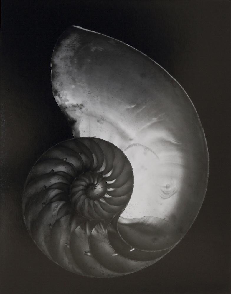 Nautilus shell - Edward Weston (1927)