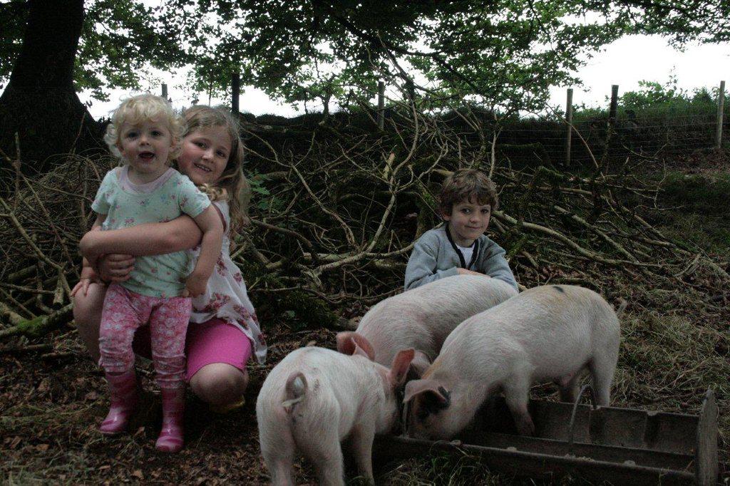 Love the farm 3.jpg