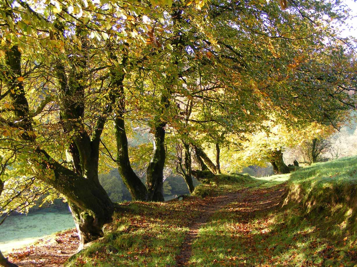 Love-North-Devon-Enviroment-5.jpg