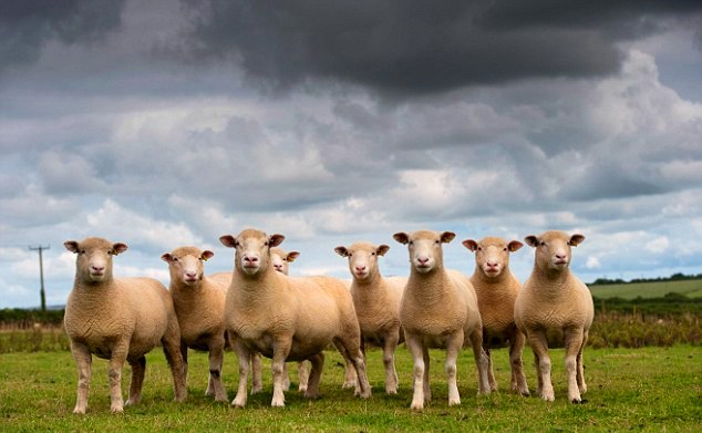 CLOUD AND SHEEP.jpg