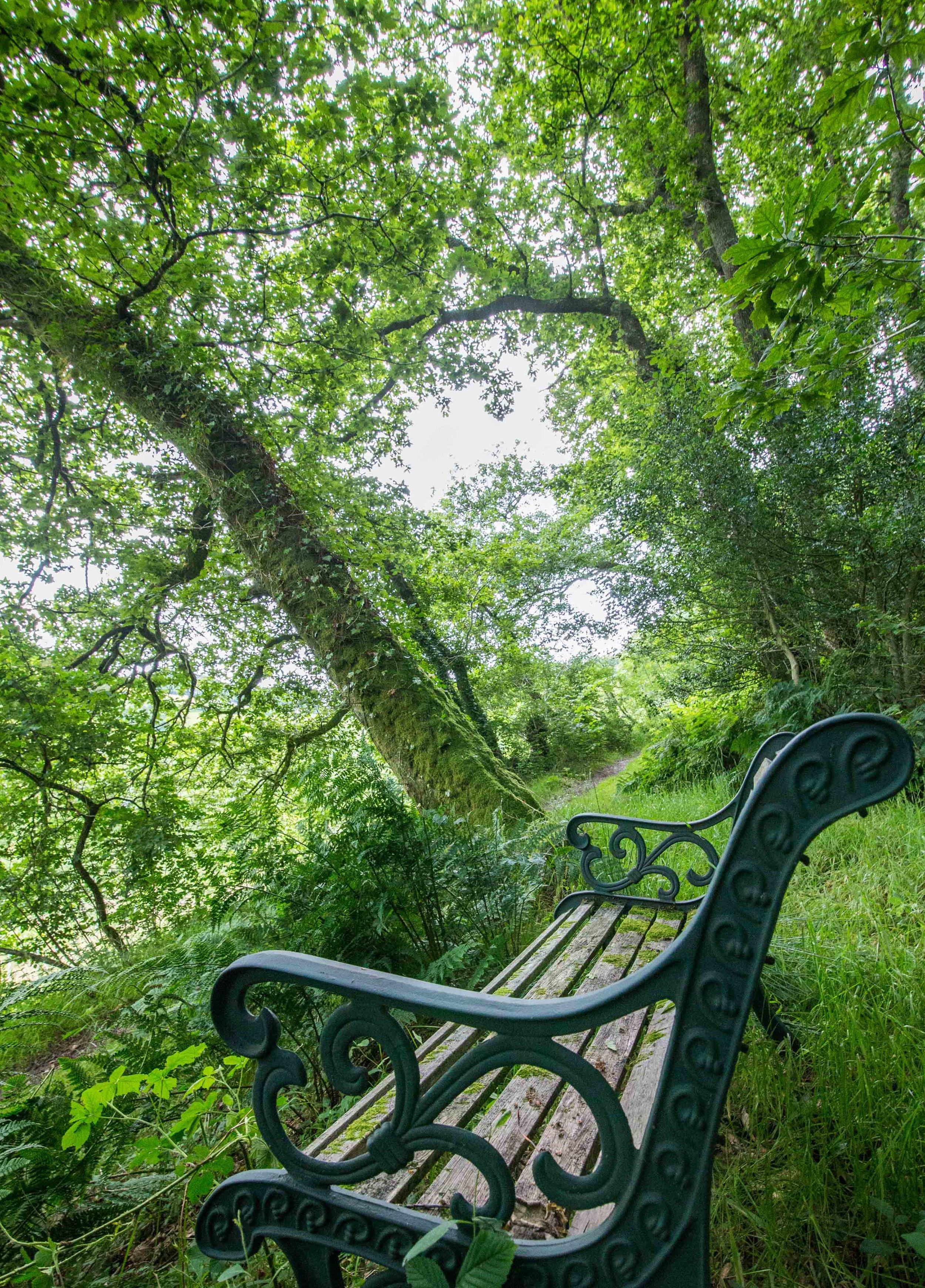 Love North Devon holidays WOODS 1.jpg