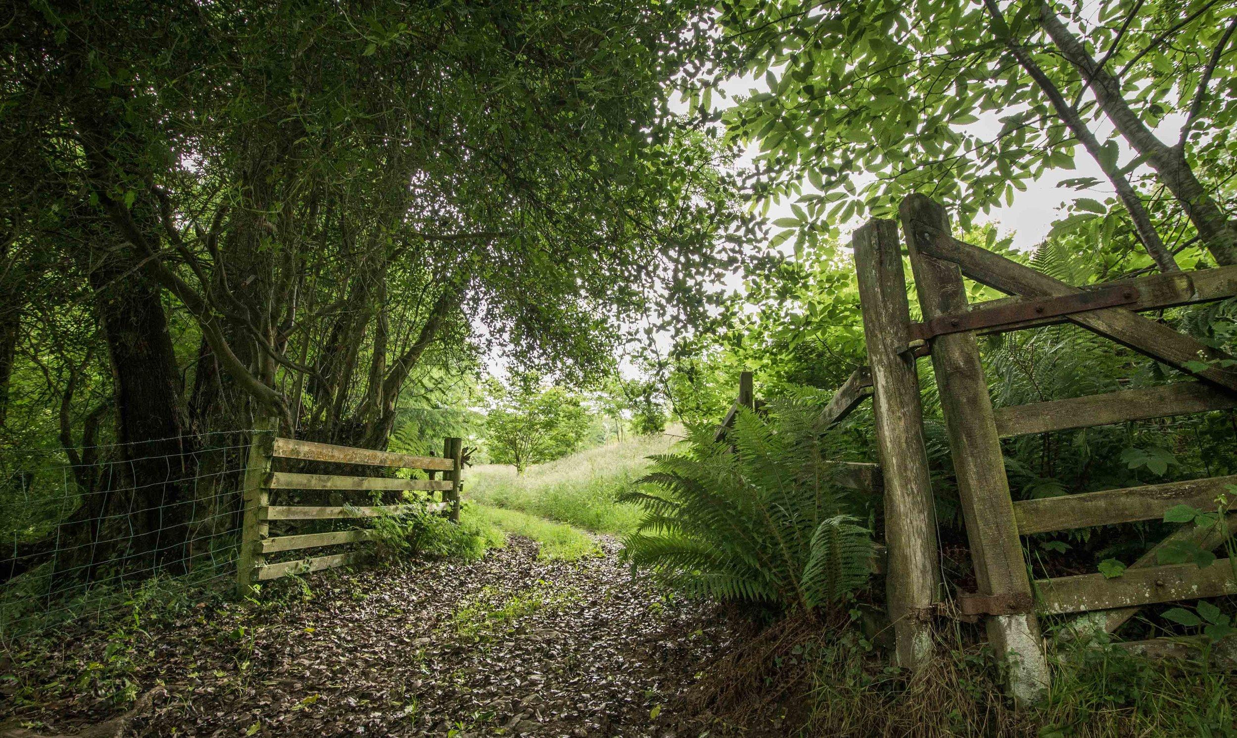 Love North Devon holidays WOODS 6.jpg