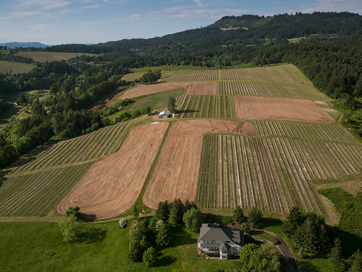 Chehalem Mountain Vineyard - Chehalem Mountain Vineyard was established in 1968 by Dick Erath, and is currently owned by Judy Jordan (no relation). We are thrilled to work with a vineyard as esteemed and historic as this one.