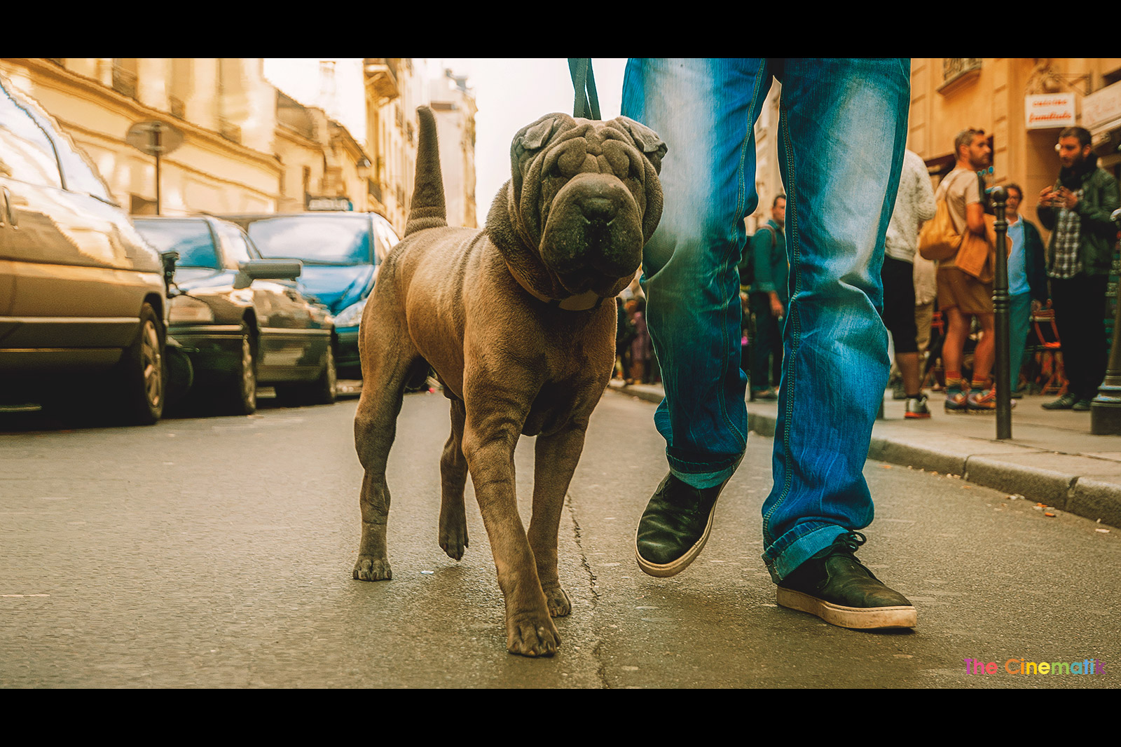Beautiful dog with old face in Paris cinematic photograph by Kamal Lahmadi/THE CINEMATIK