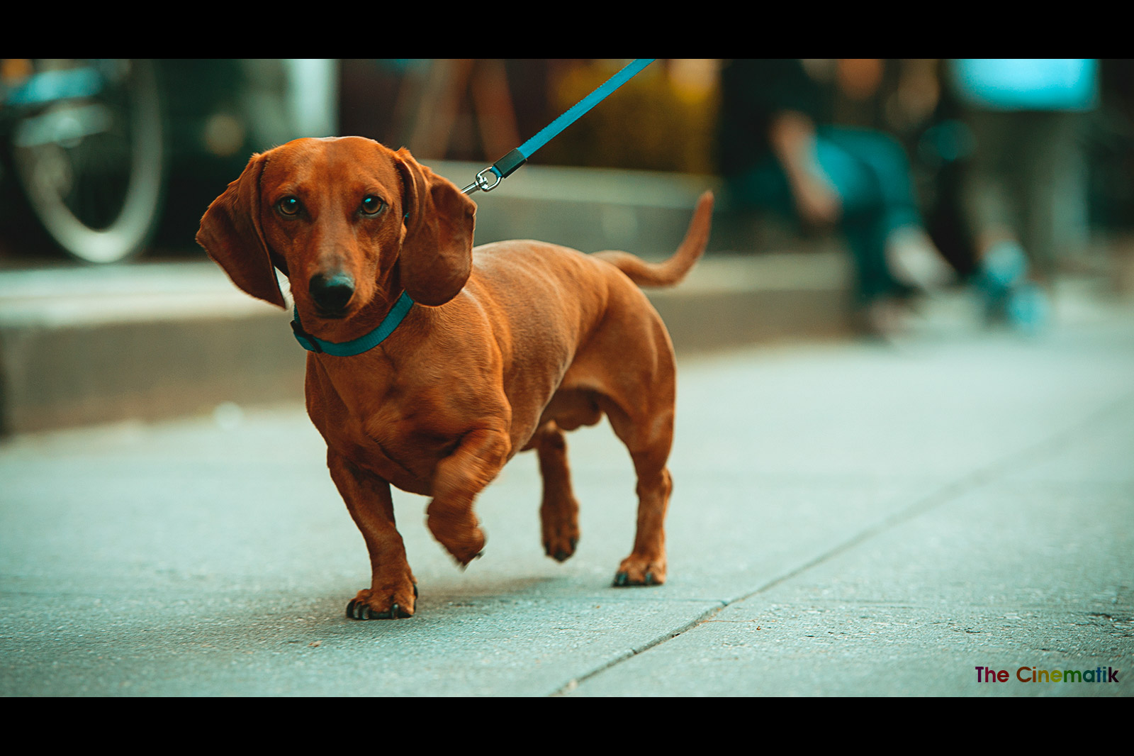 Proud little dog with funny attitude in New York cinematic photograph by Kamal Lahmadi/THE CINEMATIK