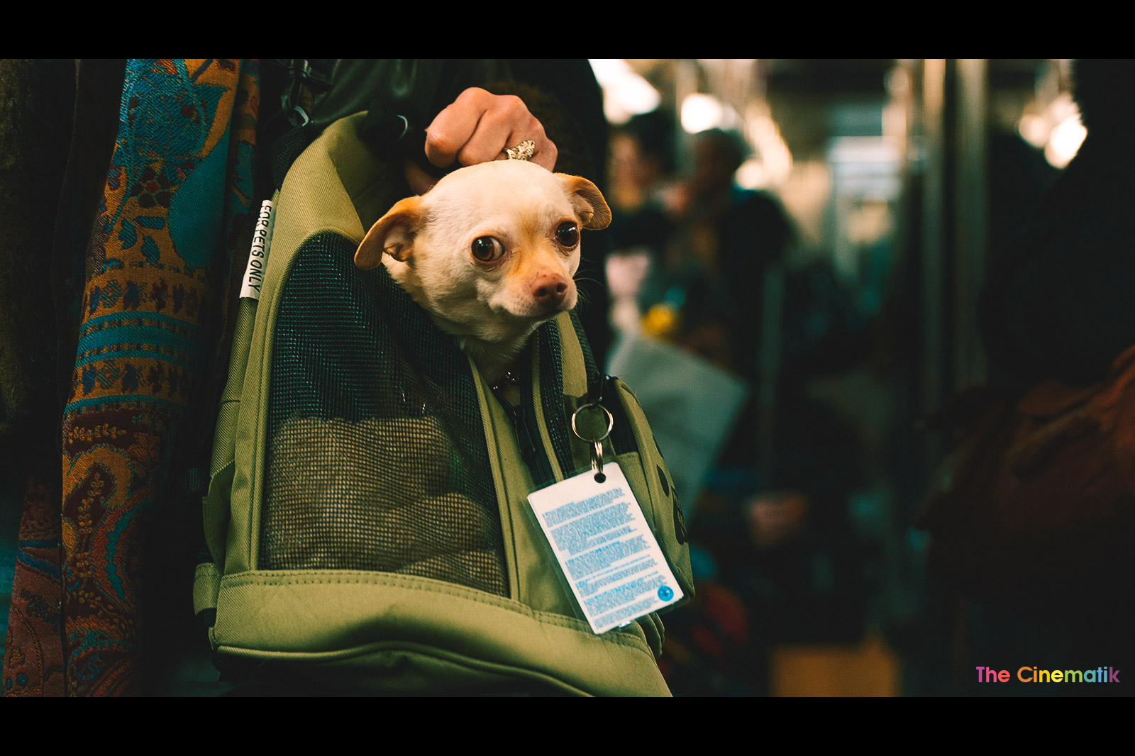 little-dog-with-big-eyes-carried-in-a-bag-and-taking-subway.jpg