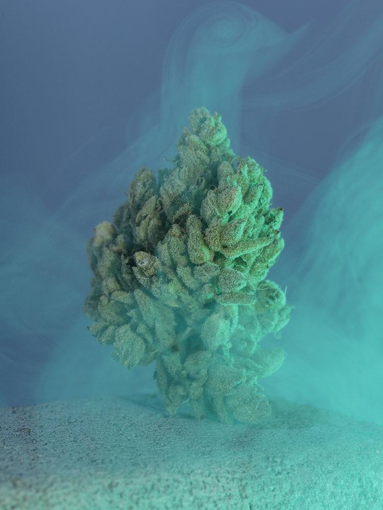 david-brandon-weed-photography-1-1.jpg