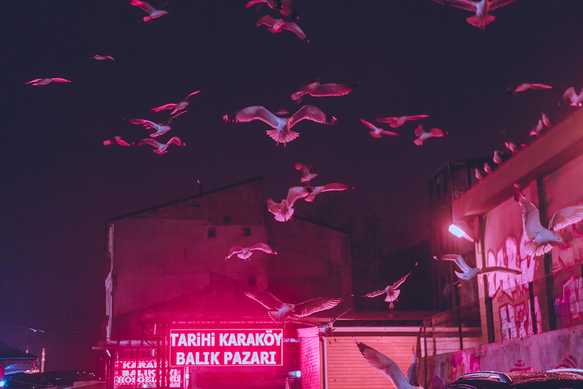 elsa-bleda-neon-photography-9.jpg