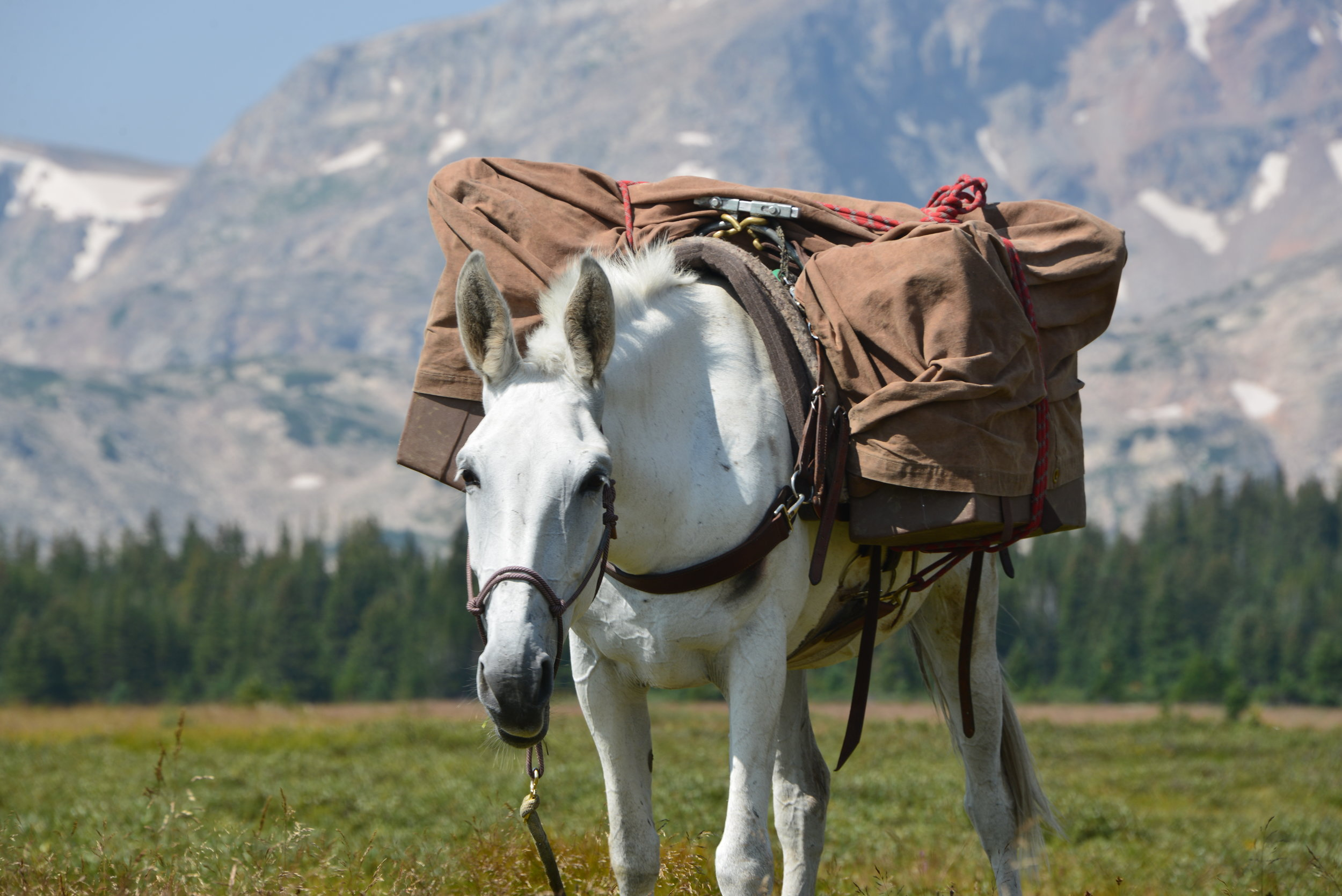 Advanced Horsepacking & Wilderness Skills - (Expedition Full)July 31-August 7 $2800We will travel to remote and rugged wilderness areas that offer solitude, sweeping vistas, and stunning beauty. Long days in the saddle will allow us to cover plenty of miles and travel through several different ecosystems, from wildflower-studded foothills to remote high-alpine meadows carved out by glaciers. Our route will take us to expansive pine forests, hanging alpine lakes, 100-foot waterfalls, and roaring rivers. During this trip, expect to hone advanced horsemanship and wilderness skills and develop a close relationship with your two- and four-legged companions as we travel together as a team. We will be setting up and breaking down camp almost daily and you will learn how to leave a light hoof and footprint while traveling through wilderness areas with horses. During this course, we will engage complex questions about our ecological past, present, and future. We hope you'll leave this trip inspired to continue to deeply love and care for wild places.Experience Level: This trip is designed for advanced riders with considerable horse experience interested in a challenging, remote, and rugged backcountry horsepacking expedition.