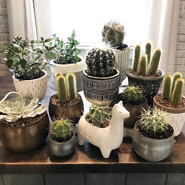 I just potted up a ton of cute little cacti, succulents and plants. These always go fast so if there's one that catches your eye, stop on in! #thecountrystore