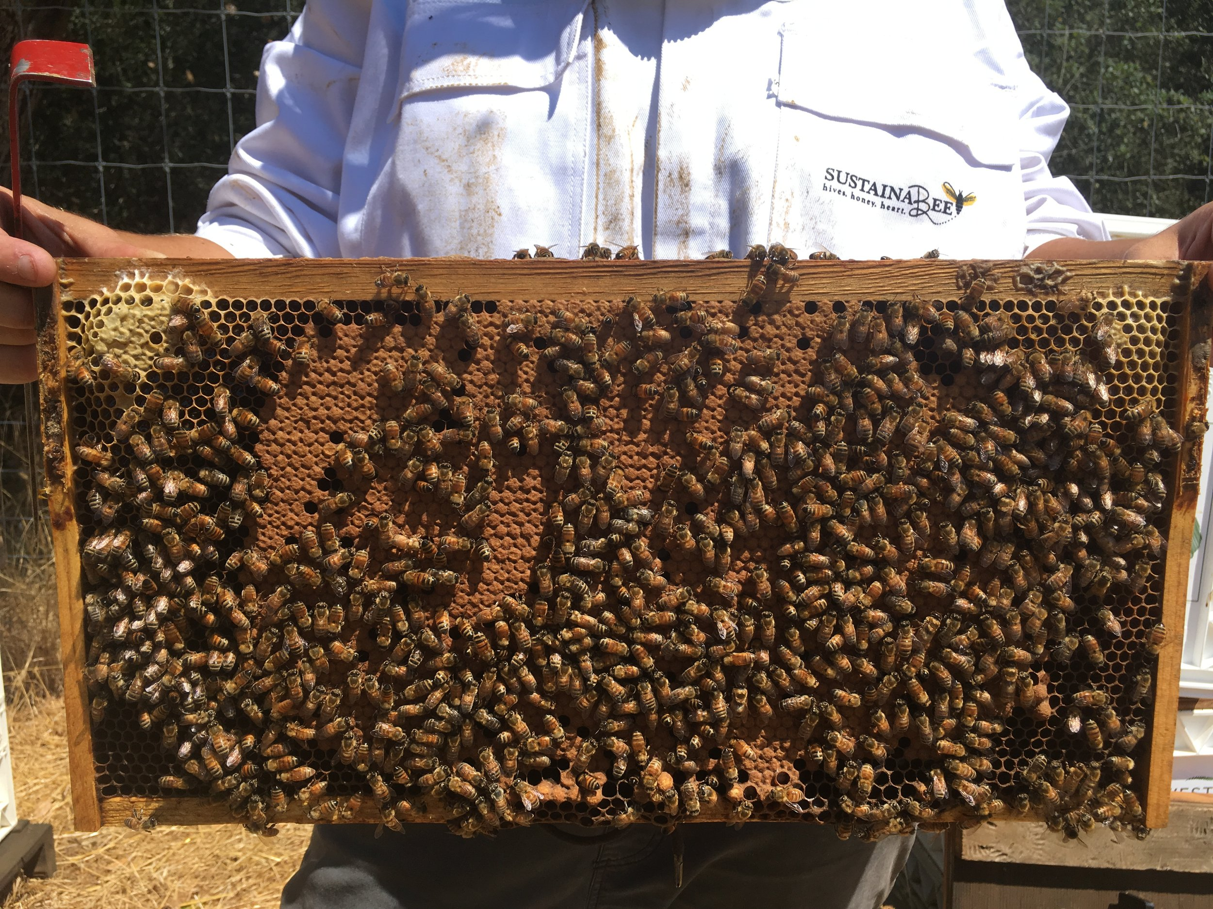 explore our hives.JPG