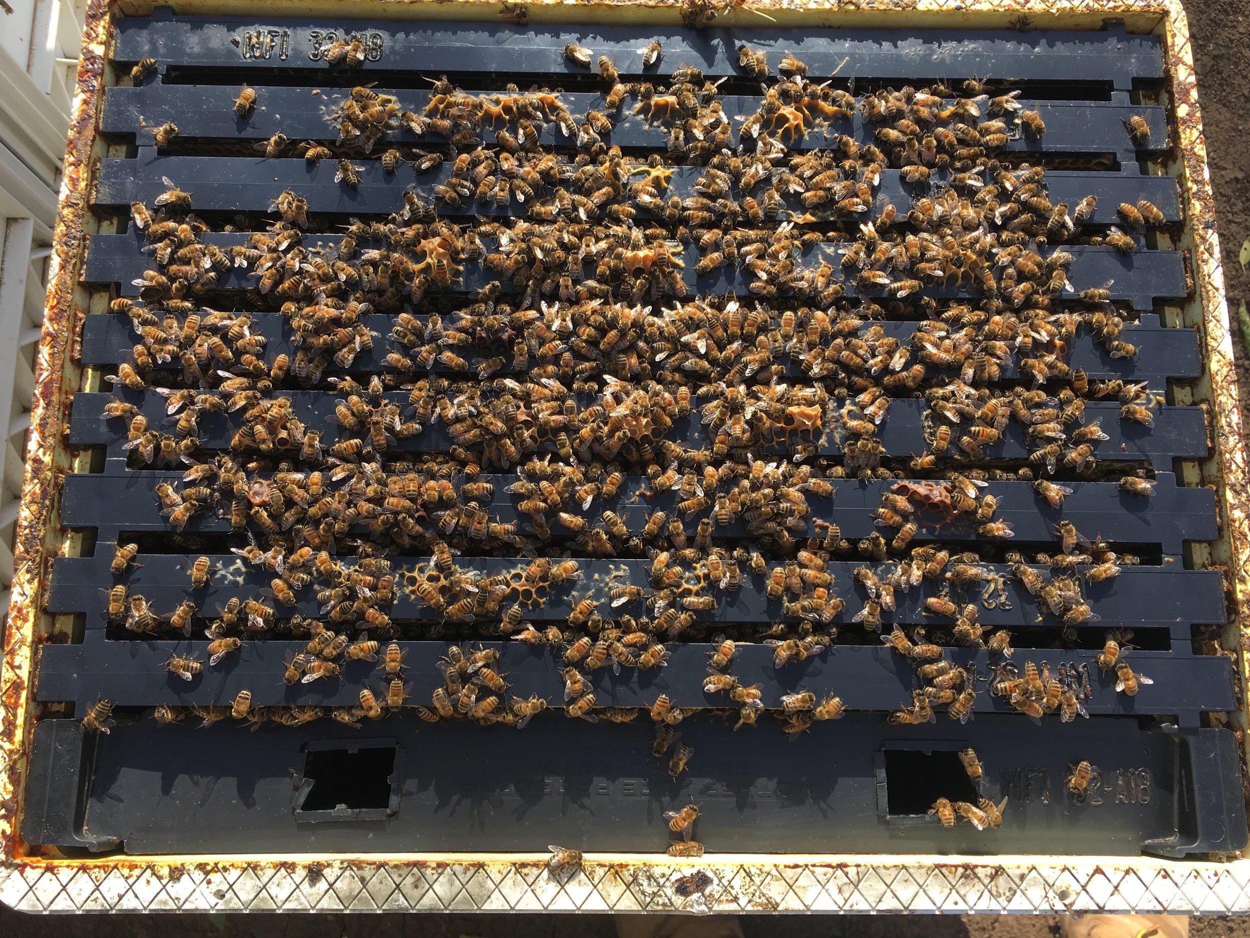 inside beehive (1).jpg