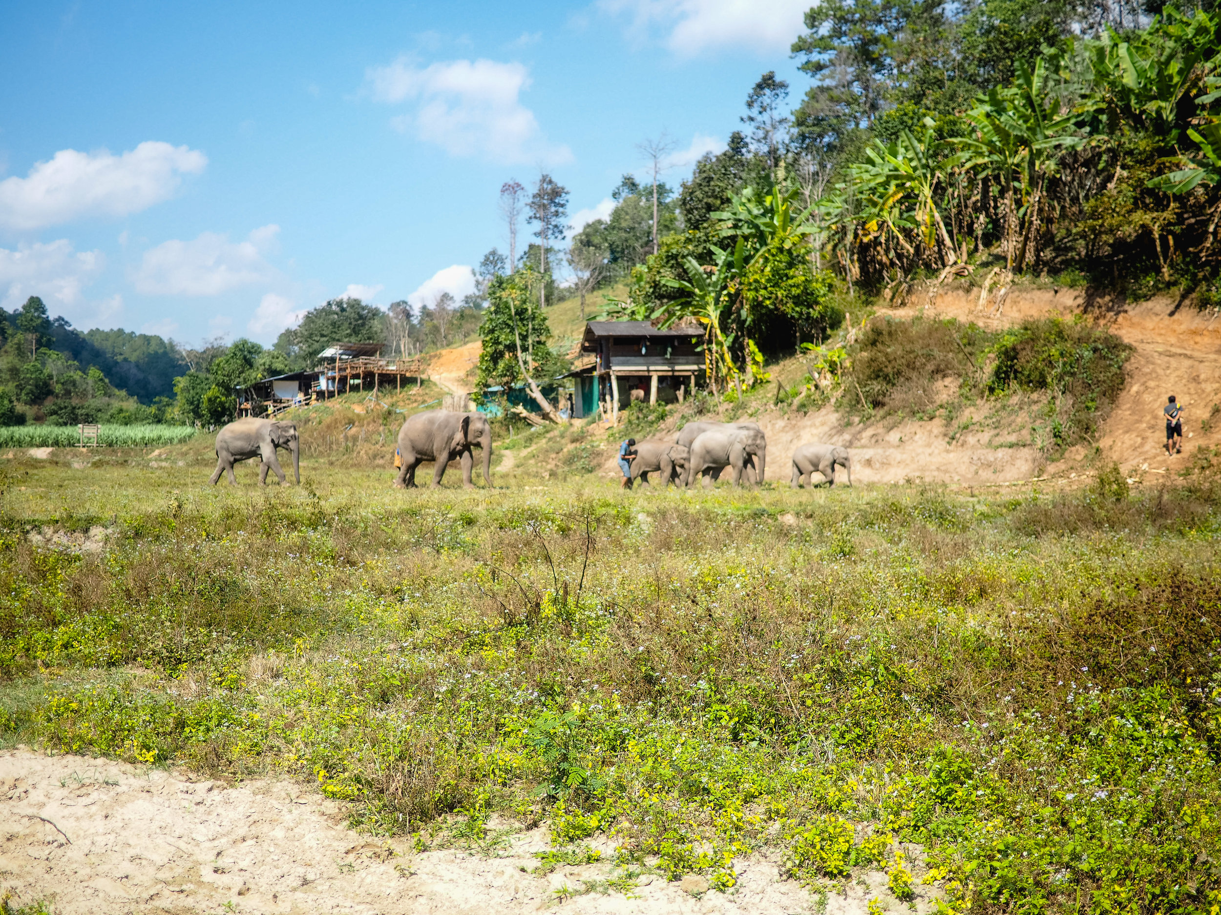 thailandelephantsanctuarycallmechristine.jpg