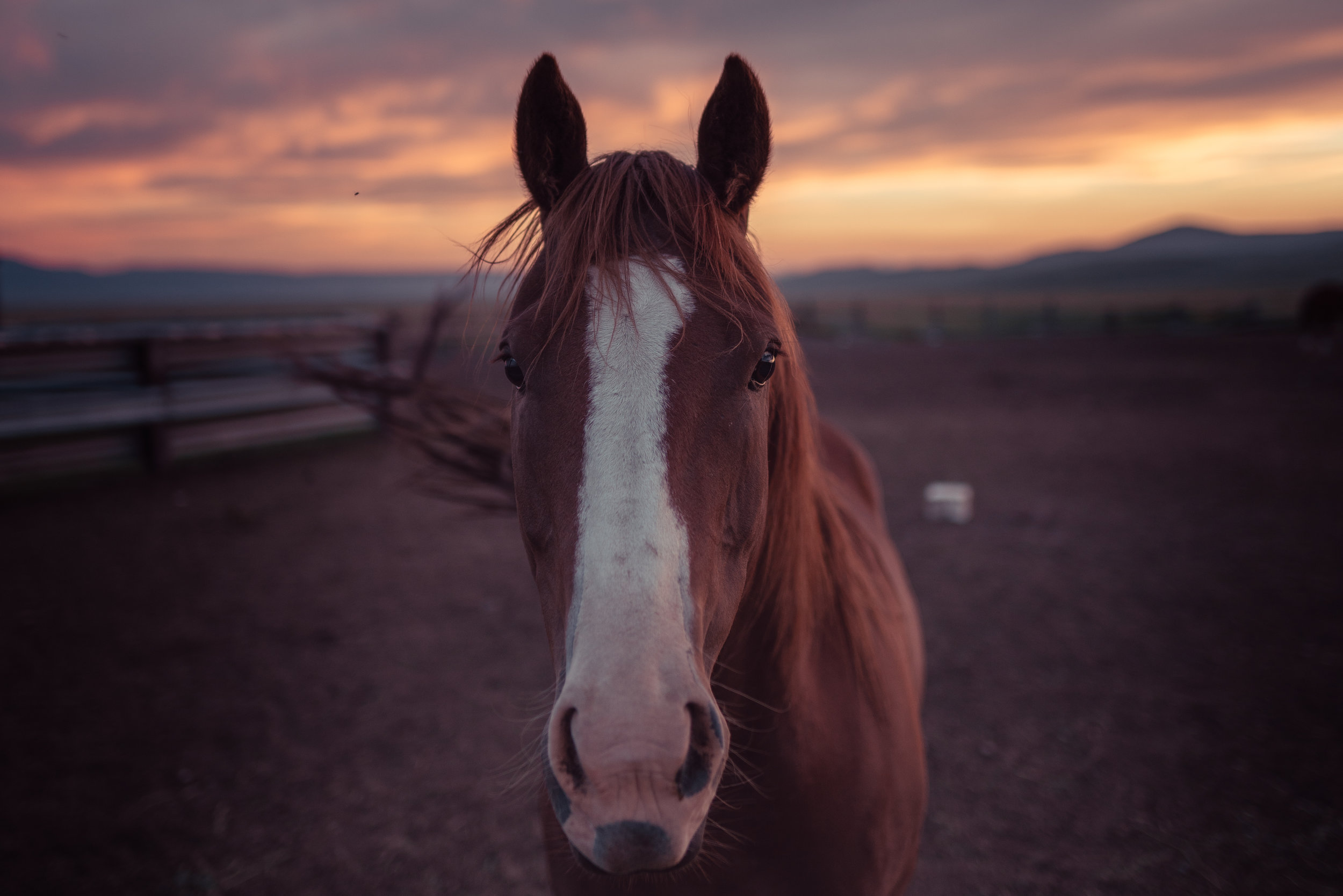 A horse at sunset in Montana's Centennial Valley.