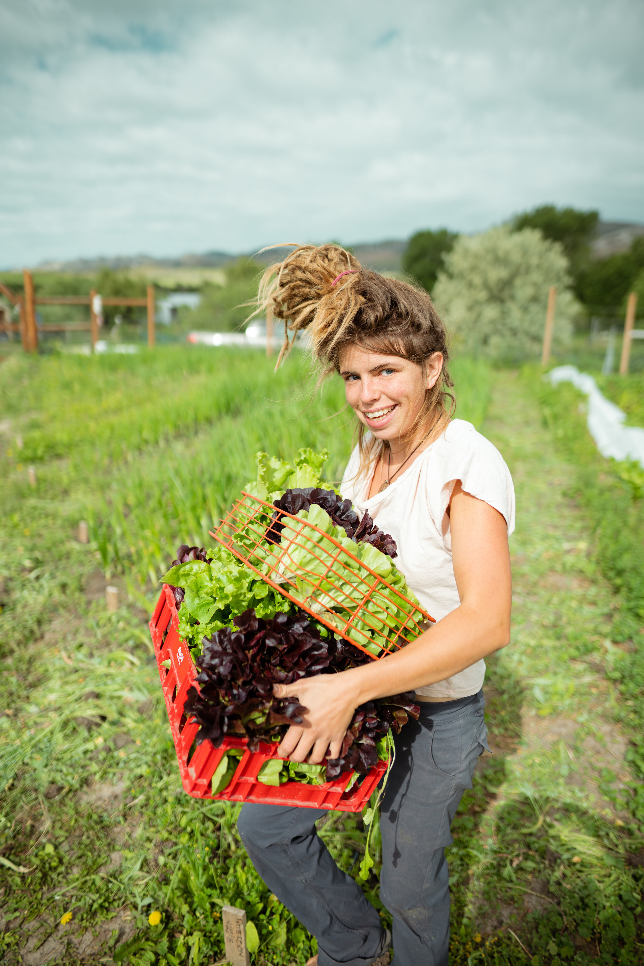 Kacy Senger picking lettuce at Sprig & Root Farm in Clarkston, Montana.