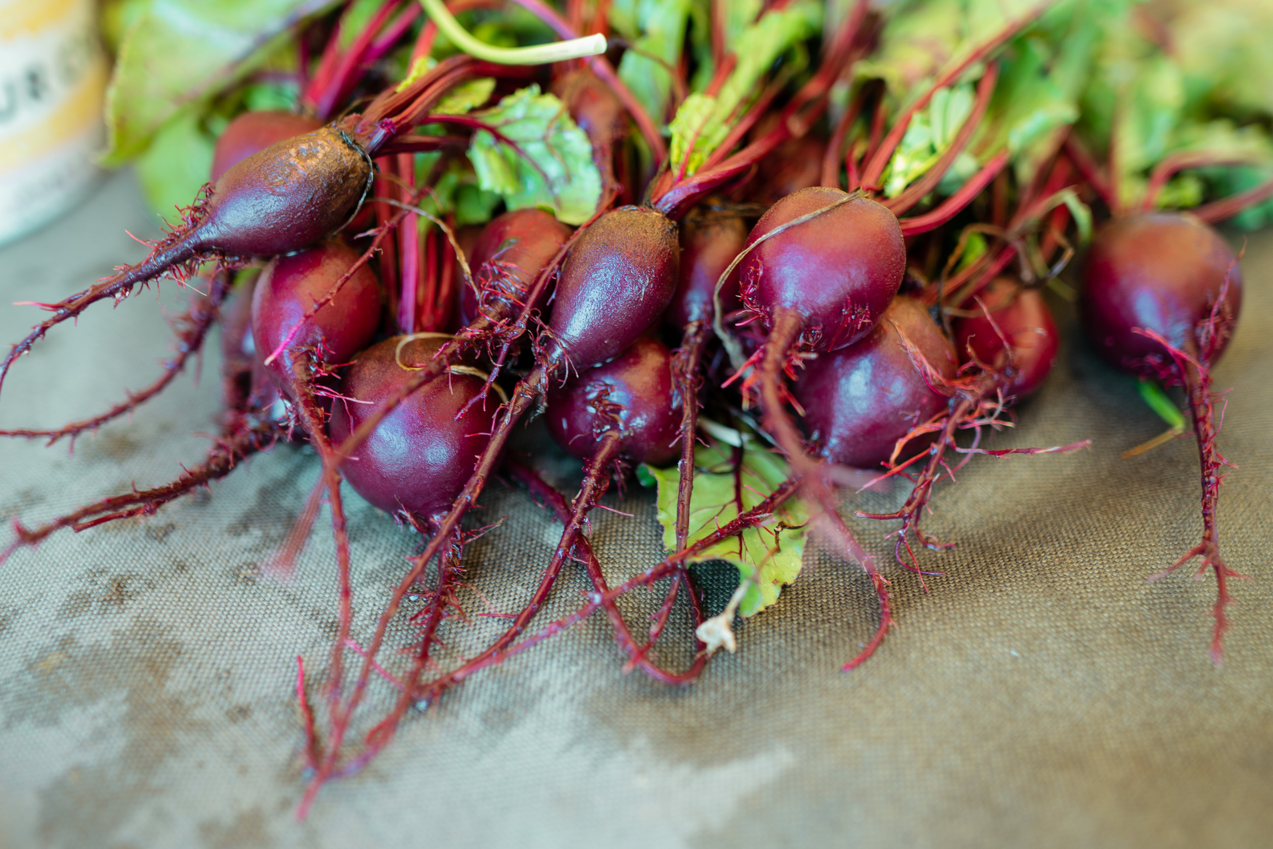 Beets at Sprig & Root Farm in Clarkston, Montana.