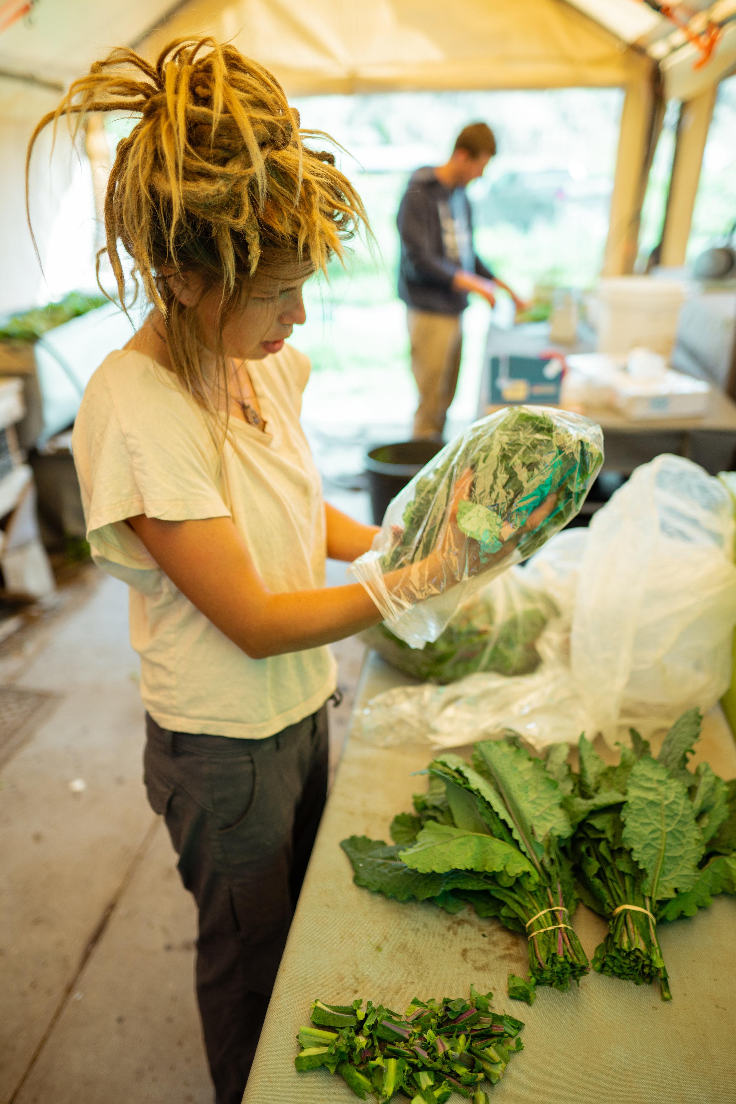 Kacy Senger packaging greens at Sprig & Root Farm in Clarkston, Montana.