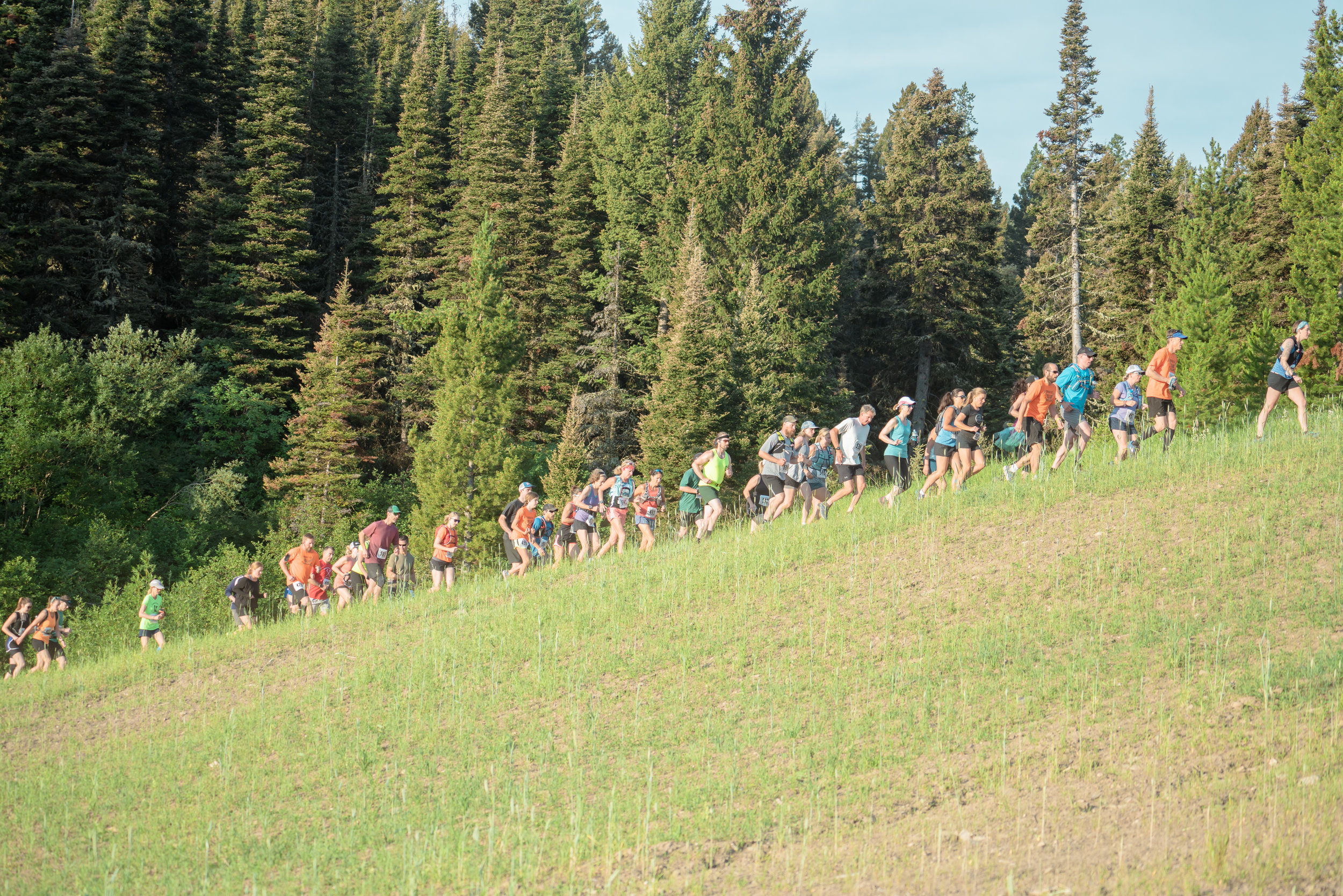 Runners at Bozeman Running Co. racing of Crosscuts at Bridger Bowl just north of Bozeman, Montana.