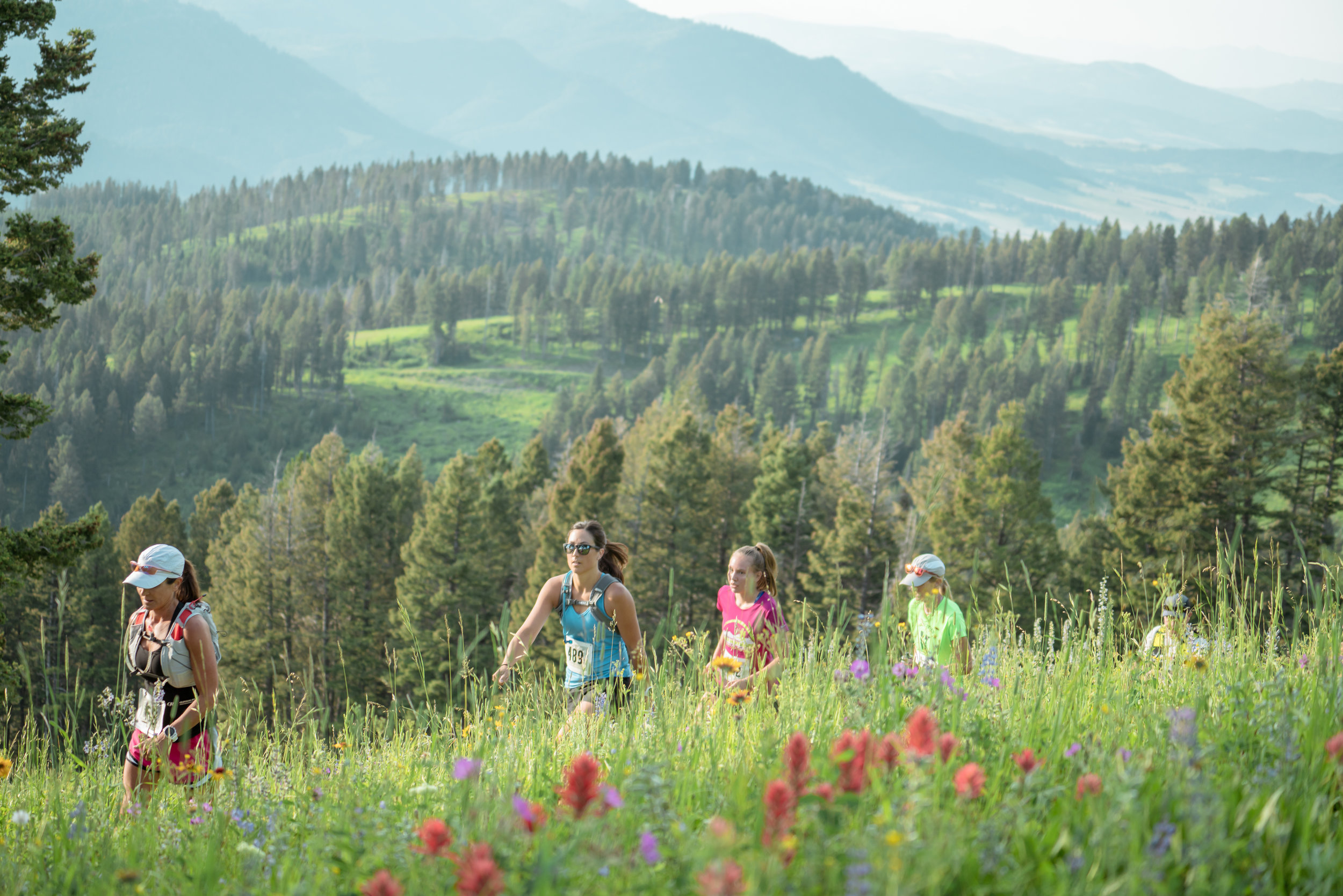 Runners at Bozeman Running Co. racing of Crosscuts at Bridger Bowl just north of Bozeman, Montana. Lots of wildflowers.