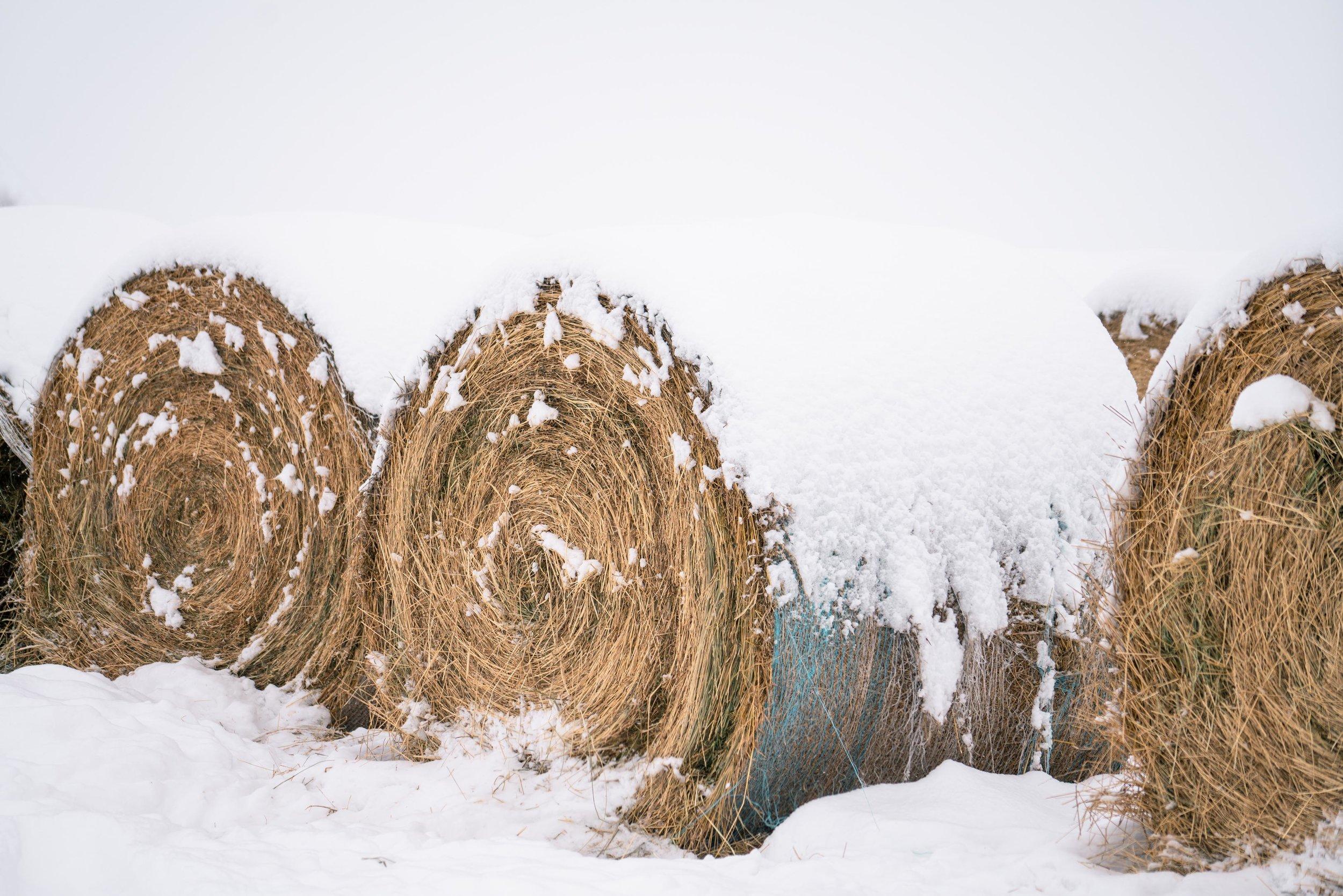 Hay bales under winter snow.