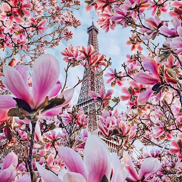 If Paris is on your travel list, now's the perfect time to book your travels for summer or fall.  With our personal experience, we can arrange a stay for you in the best districts so you can experience Paris the way you've always wanted to.