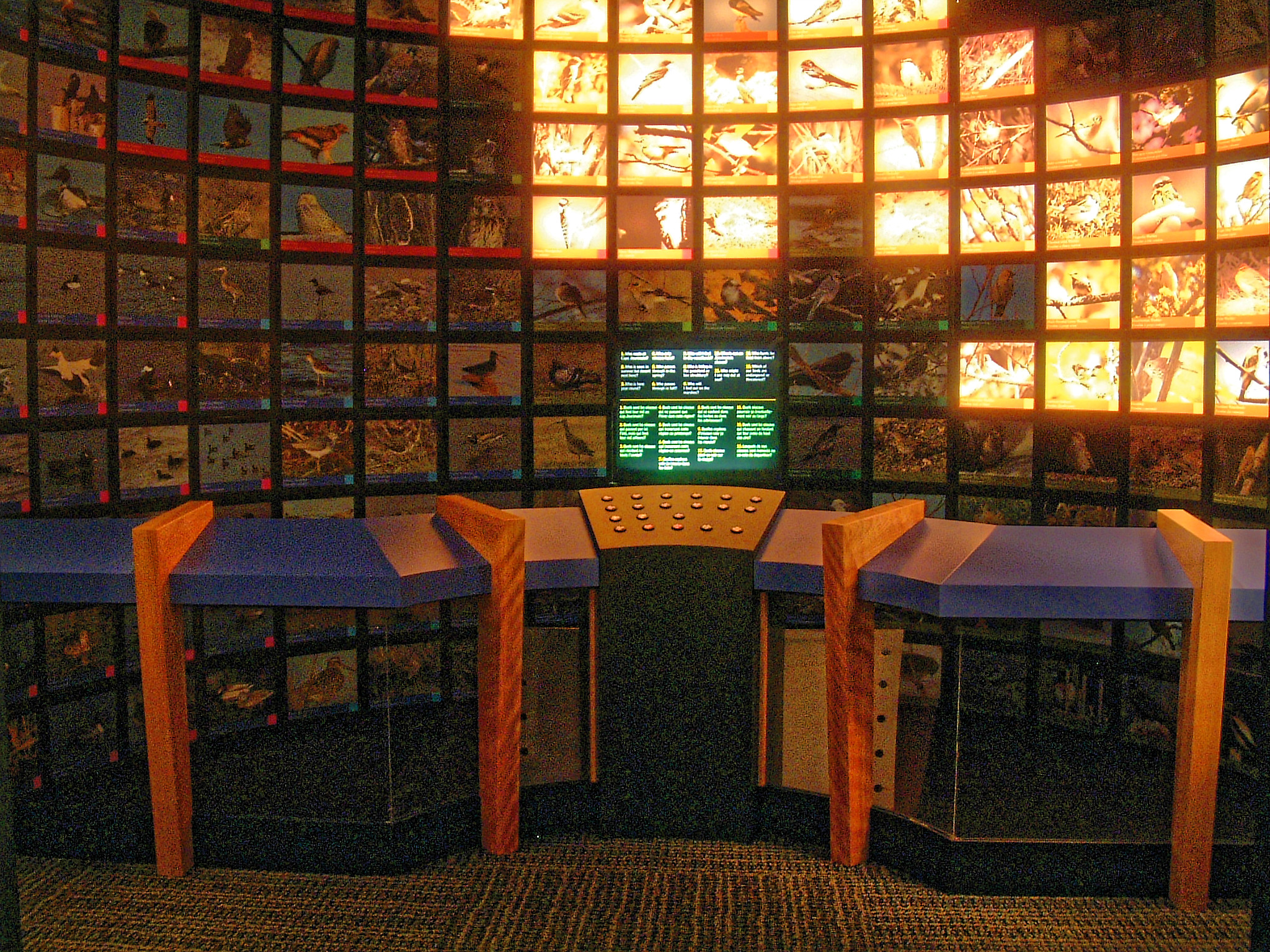 Ornithology Interactive Sorting Room