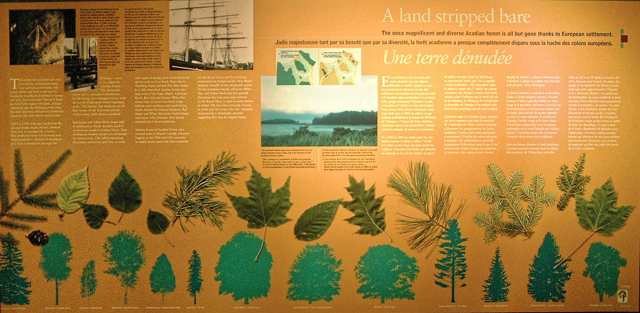 Tree Species & Lumbering History