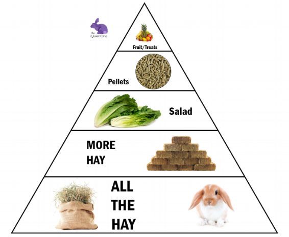 rabbit food triangle.png