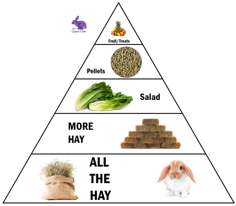 food image.png