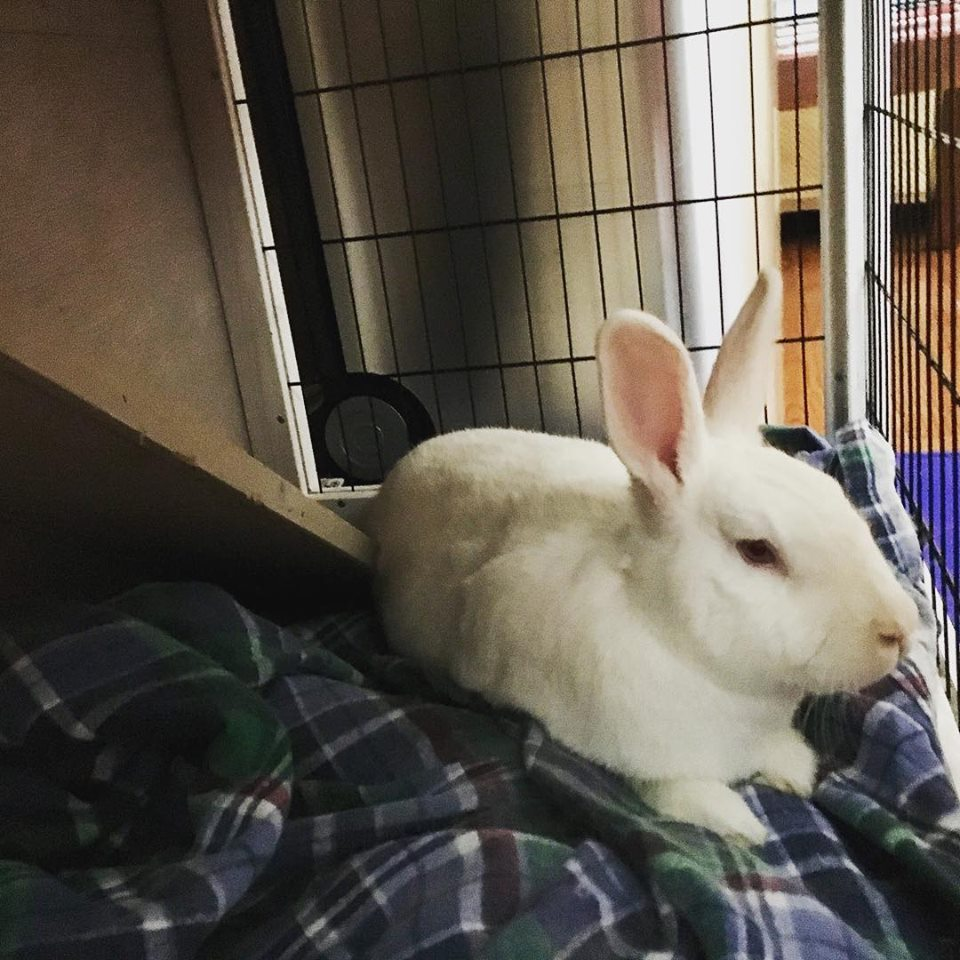 Is owning a rabbit hard work? - My answer to that is always, what's your definition of