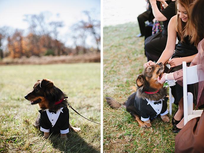 Wedding puppy!