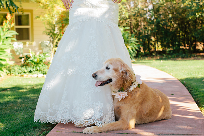 Wedding day dog