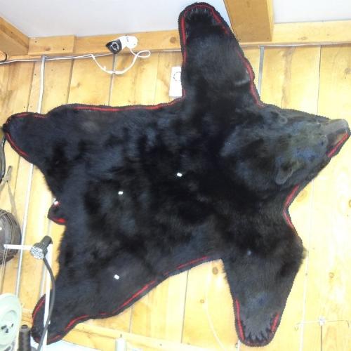 black-bear-rug-on-wall.jpeg