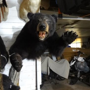black-bear-mount.jpg