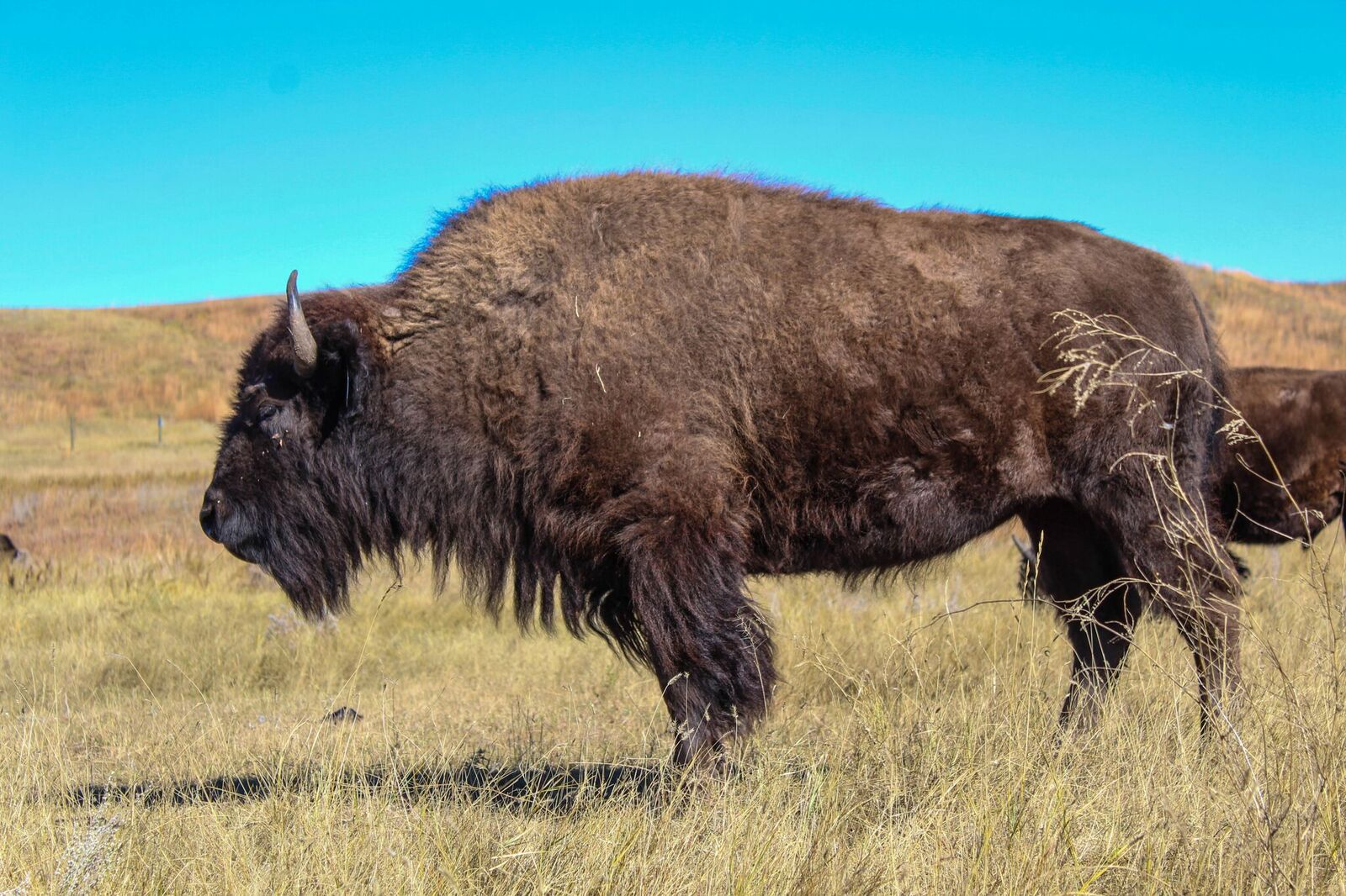 PHOTO CREDIT: Unnamed Custer State Park Photographer