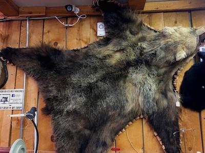 Example Bear Fur