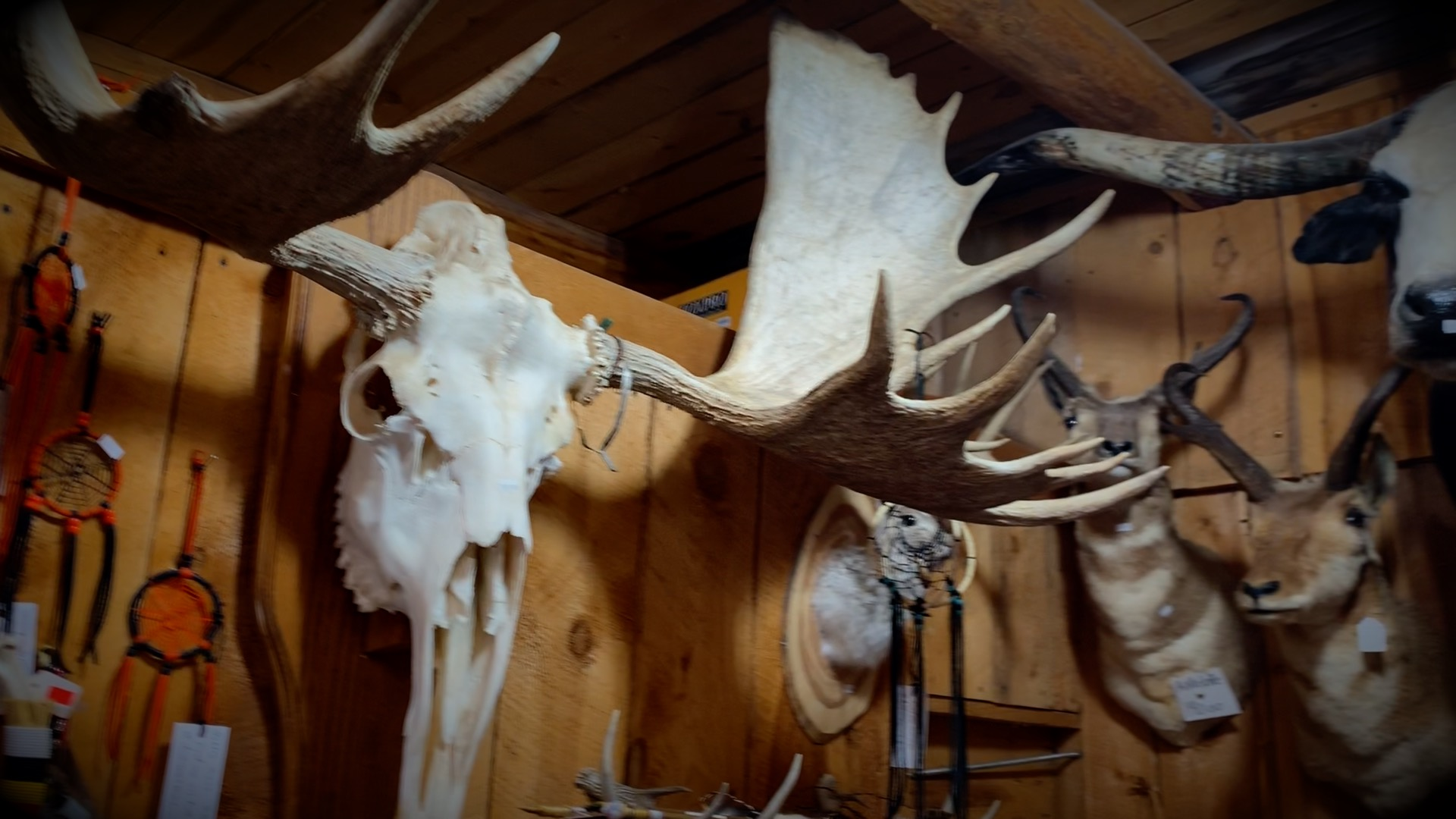Claw, Antler & Hide Co