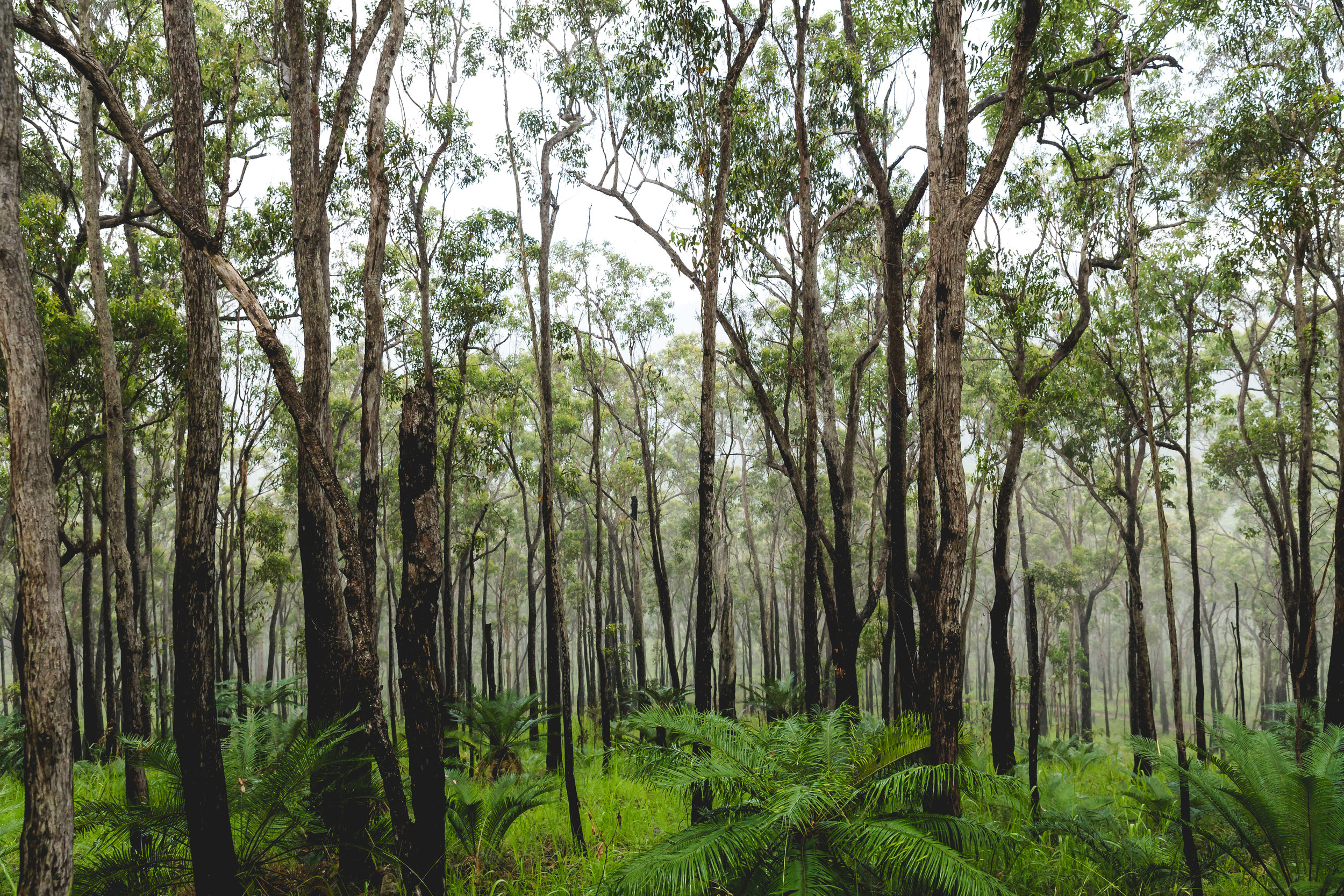 Atherton Forest. Cairns, AU.
