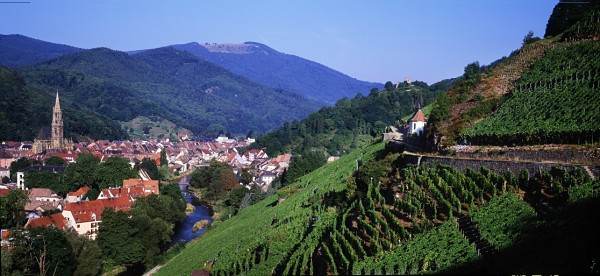 Alsace country side