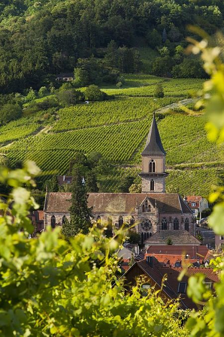 Tour of Alsace Vineyards - alsace wine region