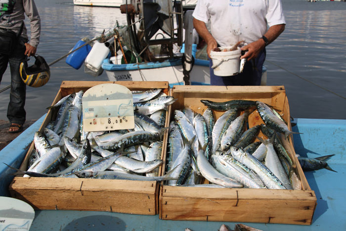 Fish Markets in Basque Country - basque country food tours