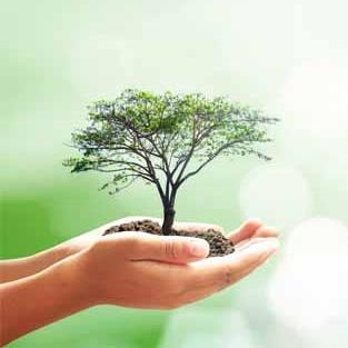 Knowledge Tree.jpg