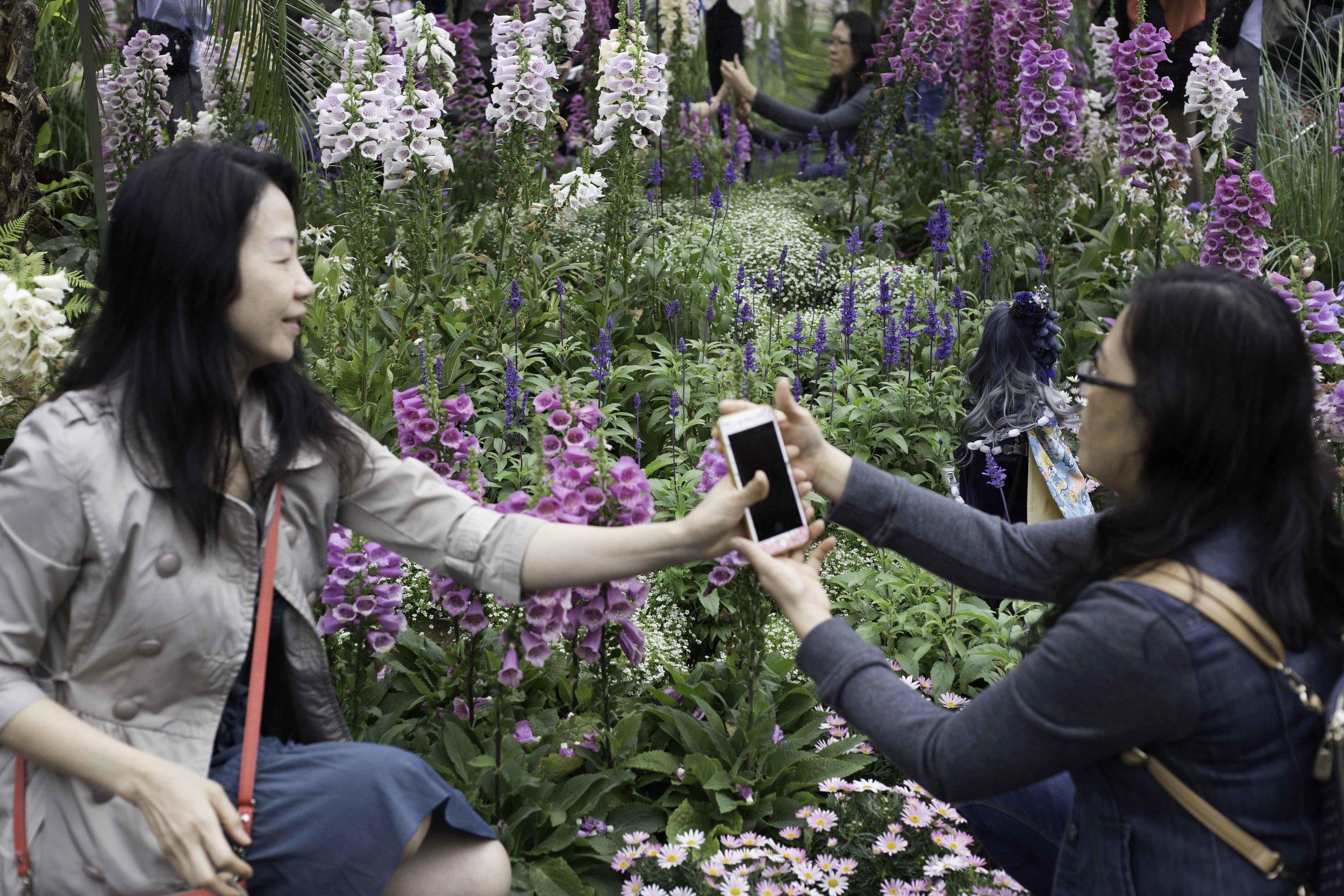 flowershow_small_s11.jpg