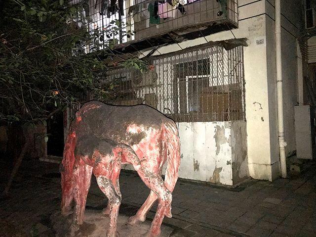 Nocturnal wildlife #urbannightlife #neibourhood #wildlife #streetscape #nocturnal #luohu #shenzhen