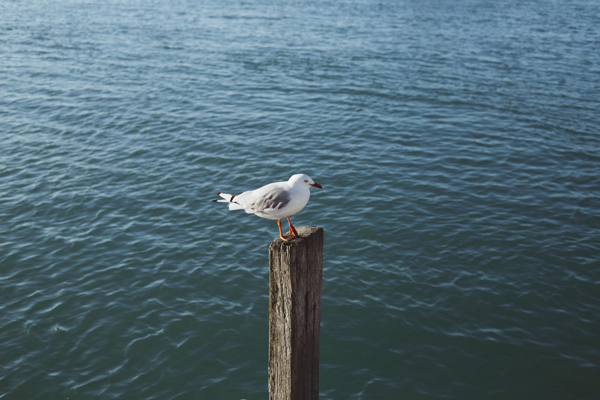 CoastalPathway-3789.jpg